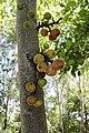 Cluster figs.jpg