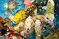 Colorful aquarium fishes, Radiant Fish World, Cox's Bazar (02).jpg