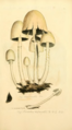 Coloured Figures of English Fungi or Mushrooms - t. 131.png