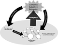 Complex Adaptive Systems (shaded).png