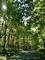 Conemaugh Gap Early Fall 2016 - panoramio - Ron Shawley (23).jpg