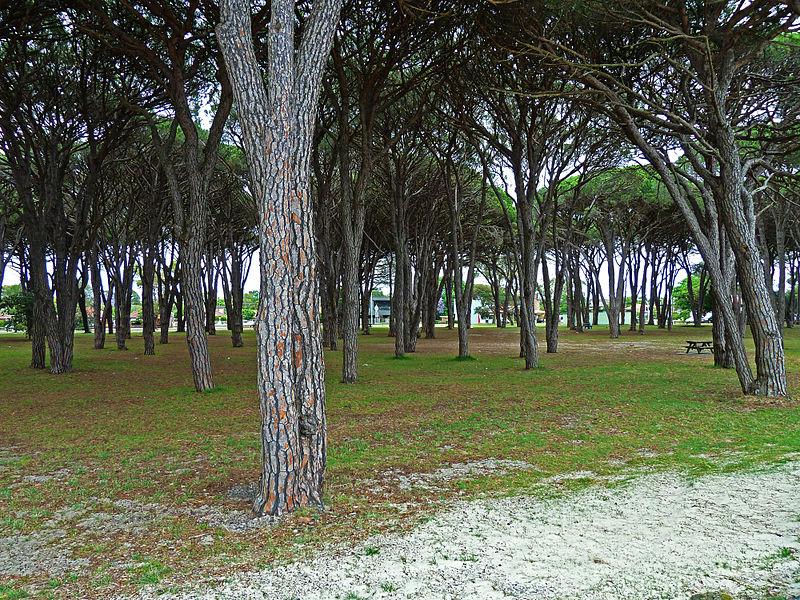 File:Cook Park, Sans Souci, New South Wales (2010-11-28) 03.jpg