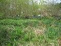 Coppiced Hazel in Queenmeadow Copse, Mottisfont - geograph.org.uk - 424535.jpg