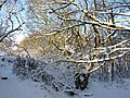 Copse in winter - geograph.org.uk - 1628314.jpg