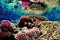 Coral Reef at Palmyra Atoll National Wildlife Refuge - DPLA - 9e97a3d6aa668d3081f3bec7e62ffc15.jpg