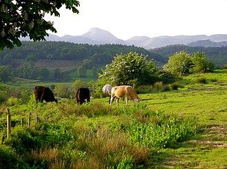 Border Region - Image: Countyleitrimcows