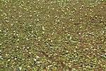 Covered Pond (31246702475).jpg