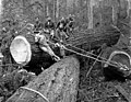 Crew yarding logs with a choker, Snohomish County, ca 1913 (PICKETT 269).jpeg