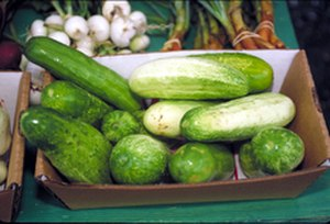 "Silly season - In many languages, the silly season is called ""cucumber time"" or similar."