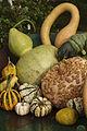 Cucurbitacés E.S.P Octobre 2009 Cl J Weber01A (23677334535).jpg