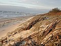 Curonian Spit 1 (National Park).jpg
