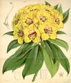 Curtis's Botanical Magazine, Plate 4336 (Volume 73, 1847).png