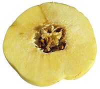 Cydonia oblonga Fruit 1.jpg