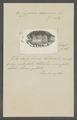 Cypraea caurica - - Print - Iconographia Zoologica - Special Collections University of Amsterdam - UBAINV0274 088 02 0050.tif