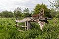 Dülmen, Weide am Naturschutzgebiet -Welter Bach- -- 2014 -- 0017.jpg