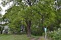 DEU-BB-MOL-Landschaftsschutzgebiet Niederungssystem des Fredersdorfer Mühlenfließes und seiner Vorfluter Mai 2015 - 01.JPG