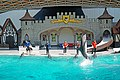 DSC09283 - Dolphin Show (37223482105).jpg