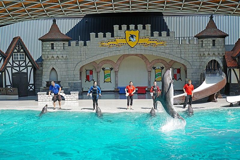 File:DSC09283 - Dolphin Show (37223482105).jpg