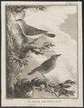 Dacnis cayana - 1700-1880 - Print - Iconographia Zoologica - Special Collections University of Amsterdam - UBA01 IZ16500157.tif
