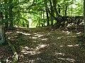 Darßwald, historische Küstenlinie - geo-en.hlipp.de - 012142.jpg