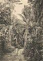 Das südliche Togo (Busse) - Tafel 8 - Uferwald in der Landschaft Vaapo.jpg