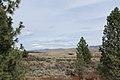 Davis Creek Park - panoramio (7).jpg