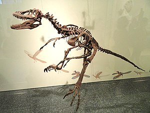 Deinonychus - Reconstructed skeleton of specimen AMNH 3015, with outdated hand posture
