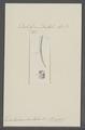 Dentalium dentalis - - Print - Iconographia Zoologica - Special Collections University of Amsterdam - UBAINV0274 081 10 0038.tif