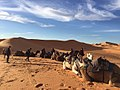 Deserto do Saara camelos passeio turístico.jpg