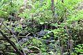 Devil's Millhopper Geological State Park 17.jpg