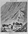 Die Gartenlaube (1875) b 841.jpg