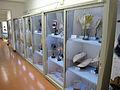 Dipartimento di biologia vegetale, collez. della manifattura brendel 01.JPG