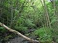 Dipton Wood - geograph.org.uk - 127834.jpg
