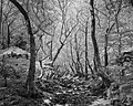 Dirfi, forest 3.jpg