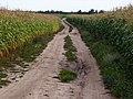 Dirt road near Bierazinskaje - panoramio (3).jpg