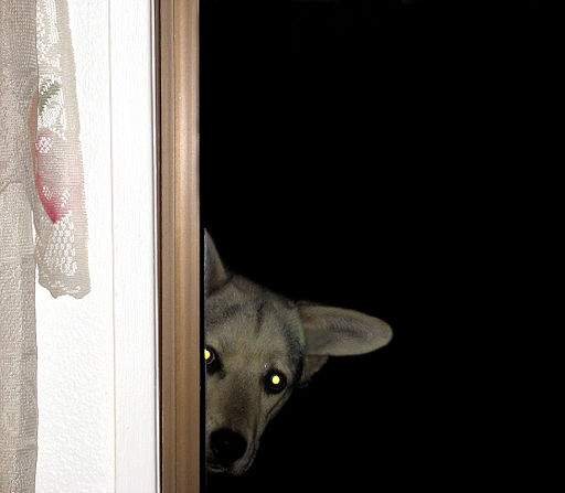 Dog Peeper (2404536896) dogs that are scared of fireworks