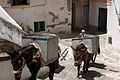 Donkeys on the steps of Amalfi.jpg