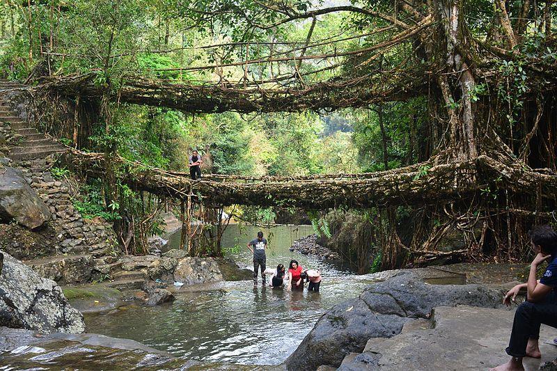 The Living Roots Bridge Trek