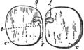 EB1911 Stem Fig 2.png