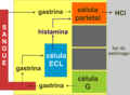 ECL cell miguelferig.png
