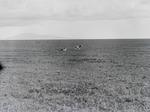 ETH-BIB-Löwenpaar in der Steppe-Kilimanjaroflug 1929-30-LBS MH02-07-0057.tif