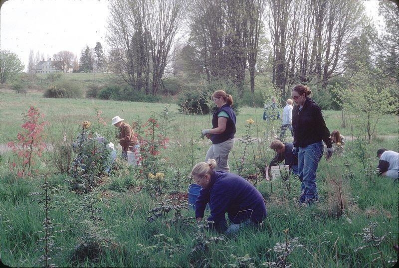 File:Earth Day habitat restoration in Discovery Park, Seattle, 2002.jpg