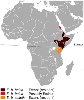 East African oryx Oryx beisa distribution map.png