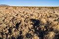 East of Cookes Range - Flickr - aspidoscelis (1).jpg
