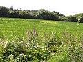 Edenvella Townland - geograph.org.uk - 1422118.jpg