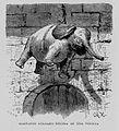"""Egipto, 1882 """"Elefante colgado encima de una puerta"""" (21052065114).jpg"""