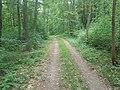 Ein Waldweg am Wieselberg bei Tauberbischofsheim-Dittwar 02.jpg