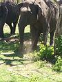 Elephantsinmtr2.jpg