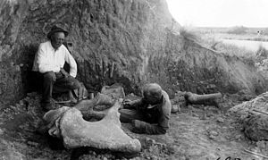 Elmer S. Riggs - Elmer Riggs (left) and Robt. Thorne (right) excavating Mammut ('southern mastodon') pelvis in situ, Argentina, 1926. Field Museum photo.