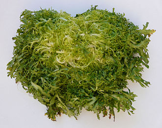 Cichorium endivia - Image: Escarola Cabell d'Àngel